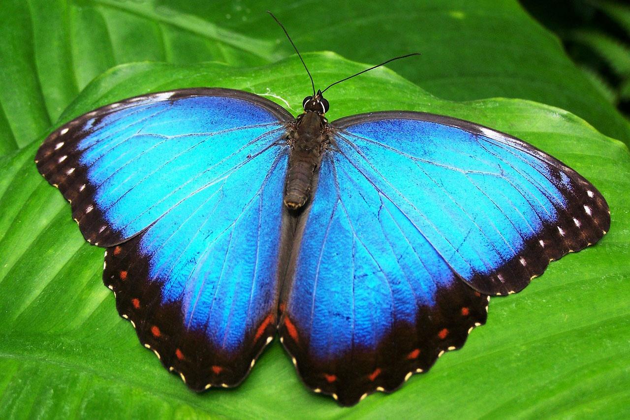 butterfly-142506_1280ok